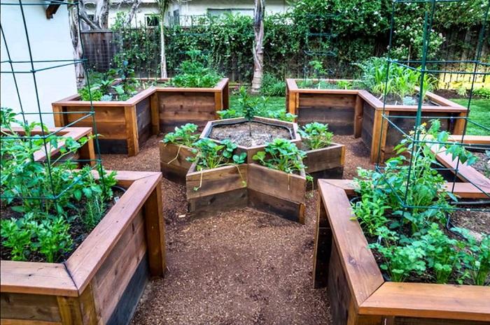 Высокие грядки с деревянным ограждением можно создать даже на небольшой придомовой территории.