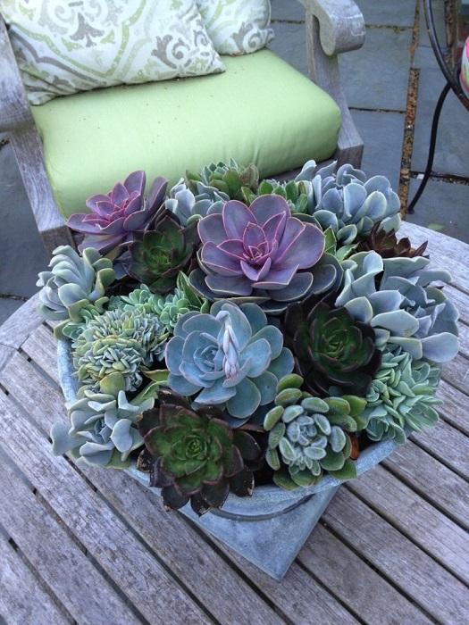 Живой миниатюрный сад, оформленный вашими руками, будет занимать совсем немного места.