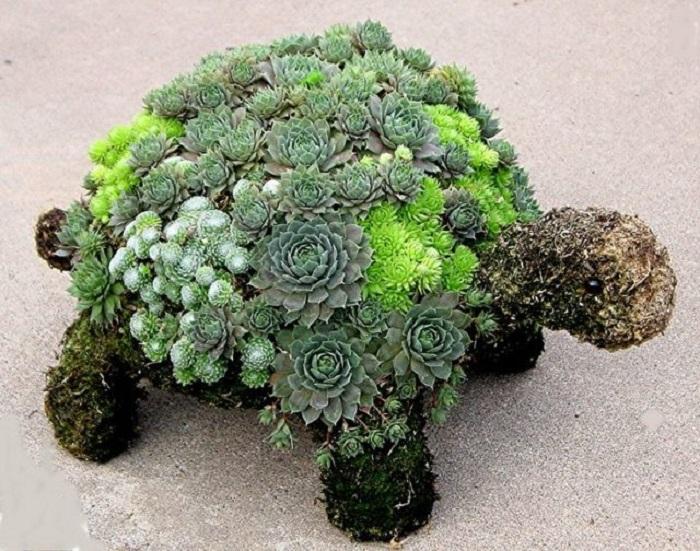 Шедевры из суккулентов уместны не только в доме, но и в саду – например, в виде скульптур.