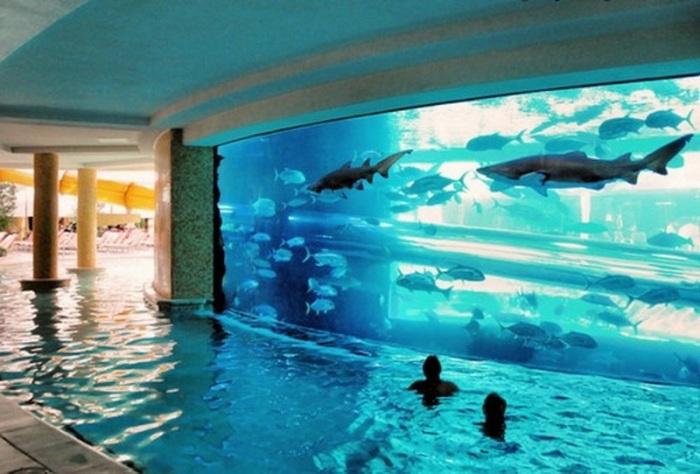 В этом бассейне можно безопасно поплавать бок-о-бок с акулами.