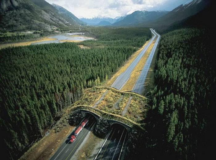 Замечательные мосты, построенные с заботой о диких животных.