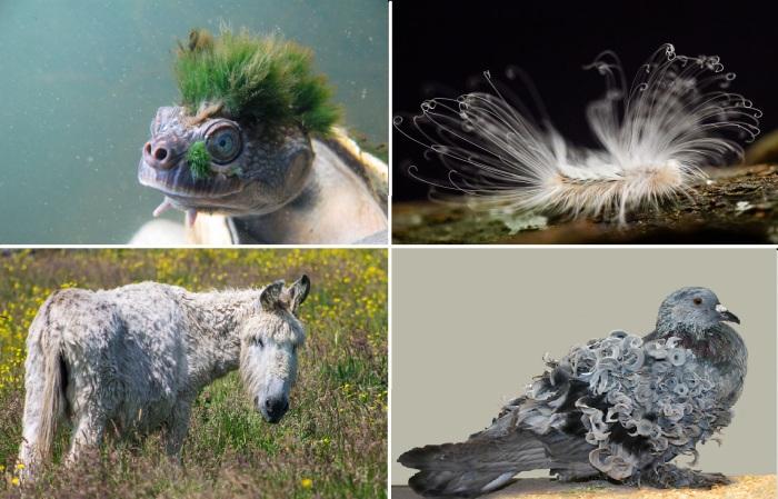15 животных с самыми необычными прическами.