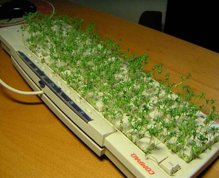 Розыгрыш для самого ленивого сотрудника, который редко пользуется клавиатурой.