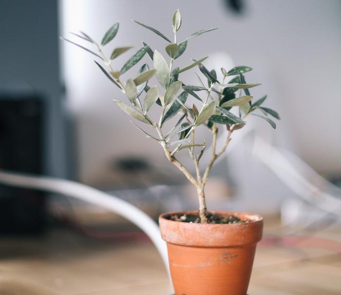 Горшки с домашними растениями здорово оживят интерьер комнаты.