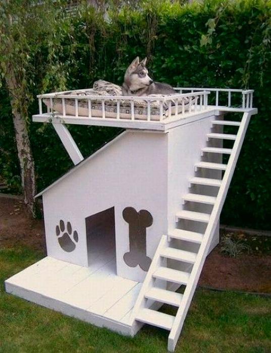 Восхитительная собачья конура.