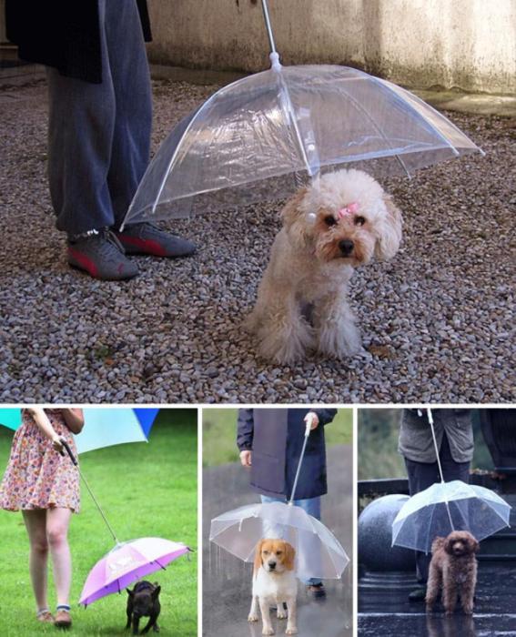 Поводок, который служит зонтом для питомца.