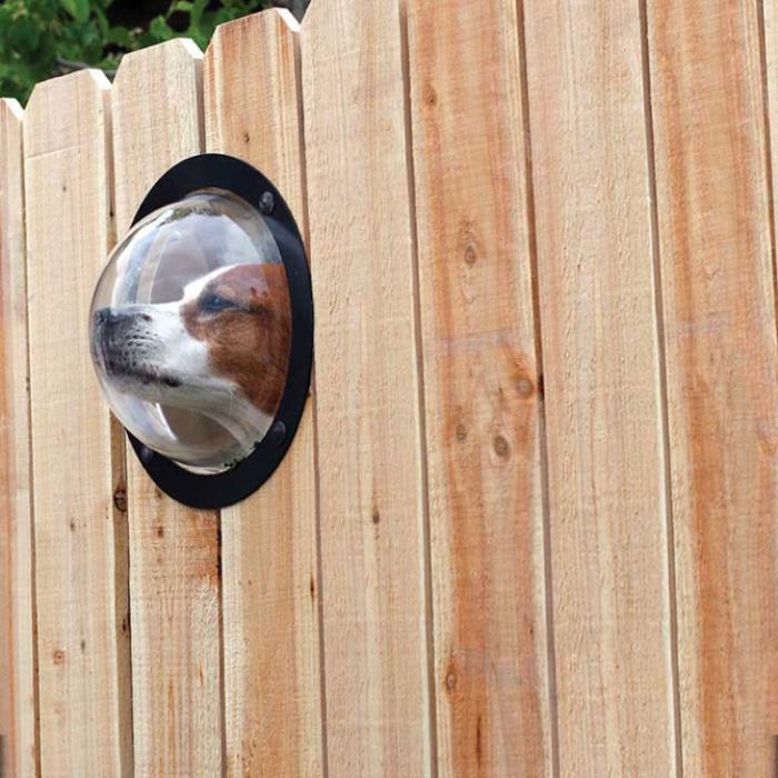 Забор с окном удовлетворит любопытство всякого пса.