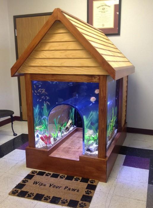 Милое соседство с аквариумными рыбками.