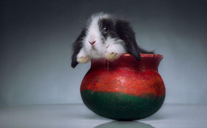 Кролик в глиняной вазе.