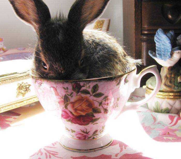 Заяц в чашке для чая.
