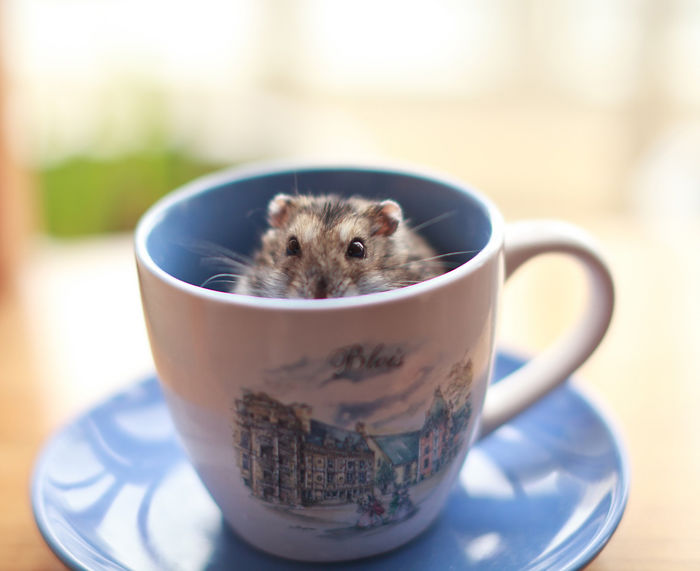 Милые зверьки в чашках для чая.