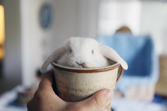 Милый кролик в чашке.