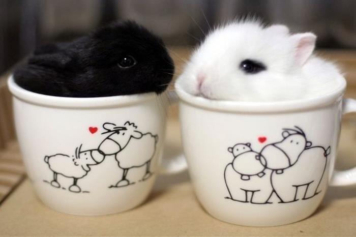 Черный и белый кролики в раздельных чашках.