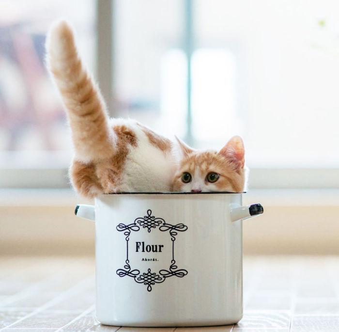 Рыжая кошка в небольшой кастрюльке.
