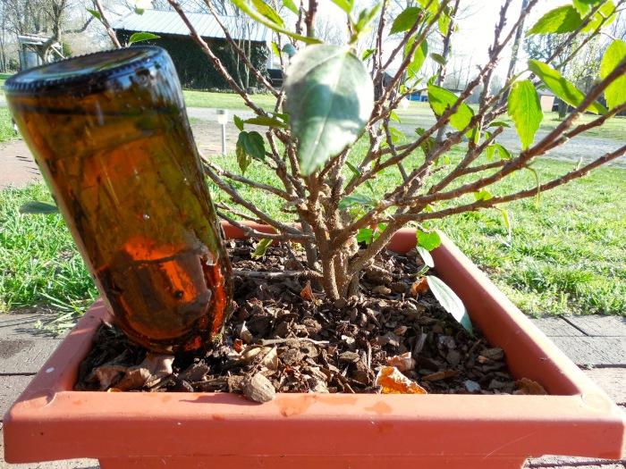 Система полива растений с помощью бутылок от вина.