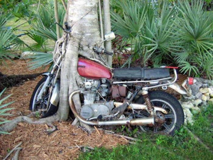 Должно быть, этот мотоцикл довольно долгое время находился под этим деревом. Никто из местных жителей городка неподалеку не знает ничего о его владельце.