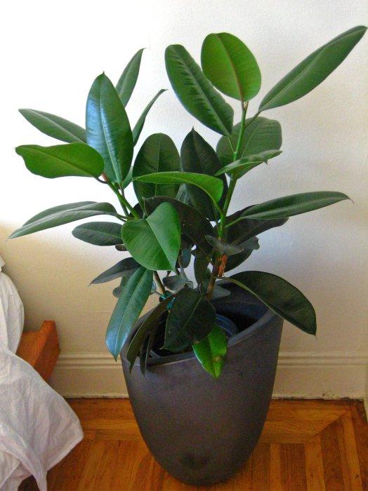 Домашние растения очищают воздух в квартире, а также служат как декоративный элемент.