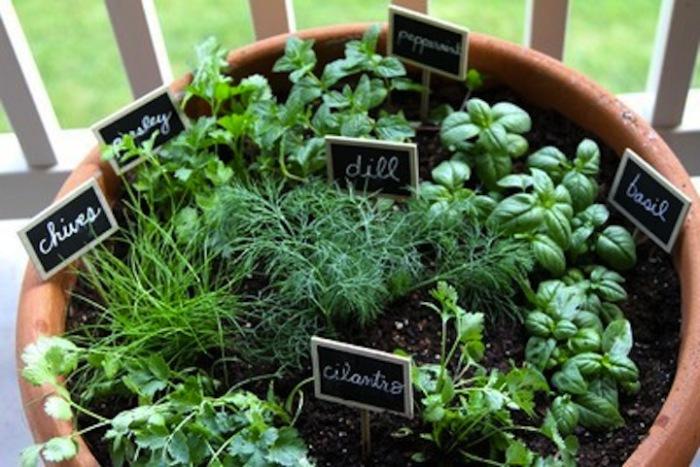 Большой горшок с растениями - самый простой способ обустроить домашний сад.
