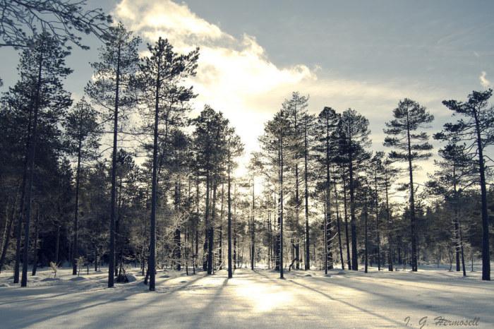 Картинки о природе лесе сосновом бору