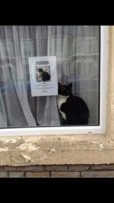 Владельцам этого котика стоит быть более внимательными.