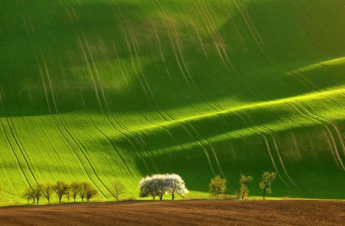 Потрясающие зеленые поля.