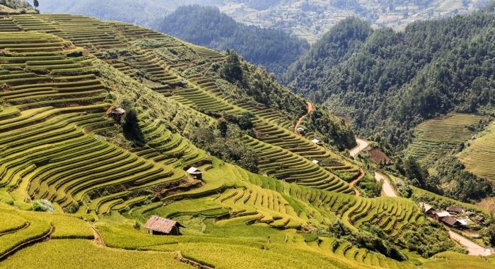 Великолепный вид на рисовые поля во Вьетнаме.