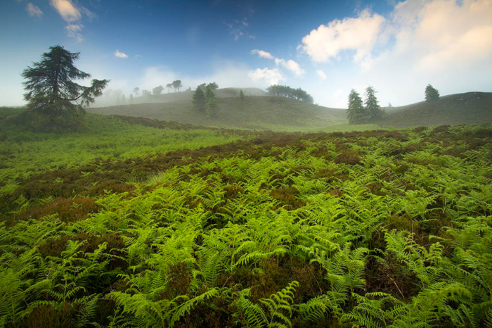 Зеленая и бескрайняя долина папоротников.