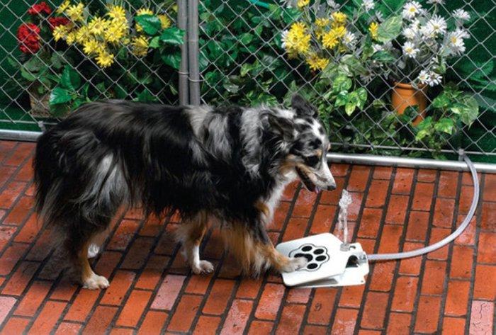 Собаки тоже заслуживают приятной жизни.