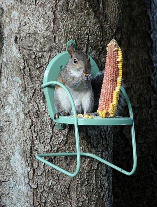 Три вещи, на которые можно смотреть вечно: огонь, вода и как белочка расслабляется на этом маленьком стуле.