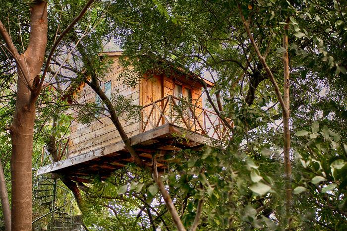 Спрятанный в кронах деревьев домик в Индии.
