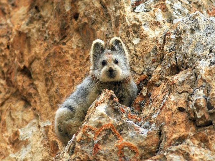Снимок млекопитающего, которое давно считалось вымершим.