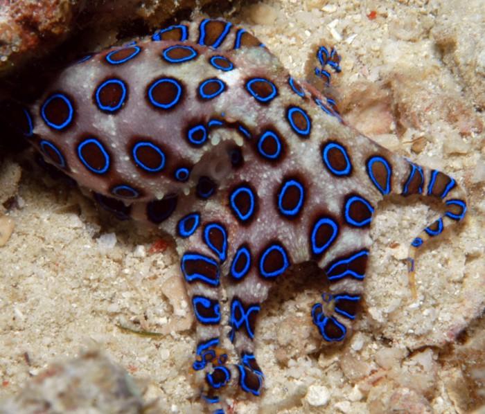 Необычная раскраска для осьминога.