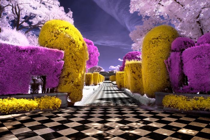 Необычное сочетание цветов.