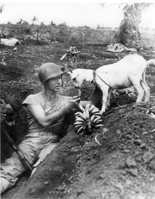 Щедрость и человечность во время войны.