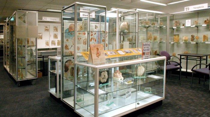 Музей-каталог огромного разнообразия заболеваний и их воздействия на организм человека.