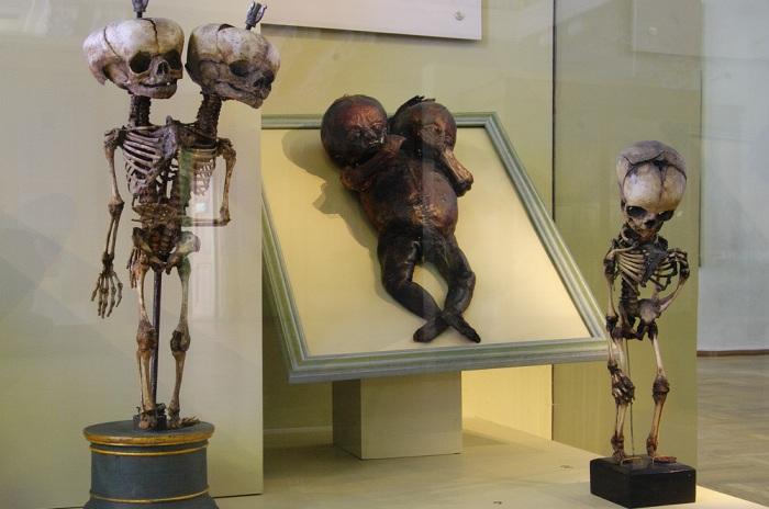 Музей-«кунтскамера», в котором собраны уникальные и редкие экземпляры.
