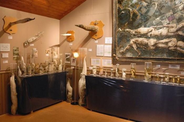 Некоторые экспонаты музея хранятся в пробирках и стеклянных ёмкостях, а некоторые висят на стенах, как охотничьи трофеи.