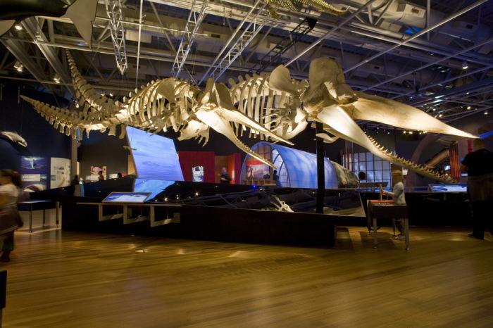 В этом музее собраны все ископаемые, найденные на территории Новой Зеландии.