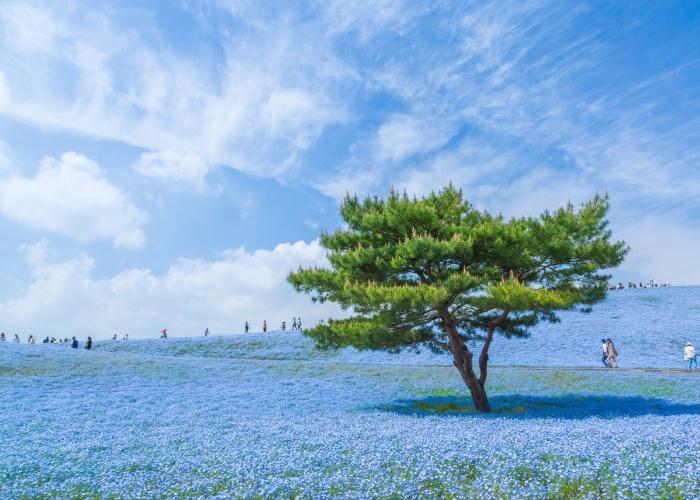 Красоты Японии от  Hiroki Kondo.