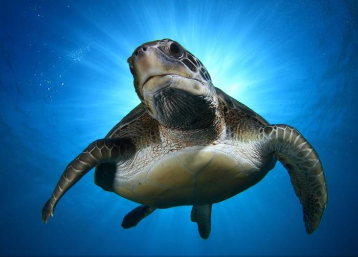 Черепаха на снимке Montse Grillo.