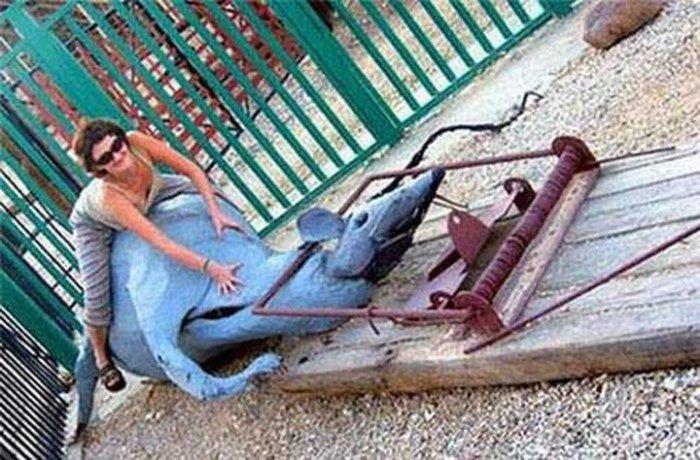 Убитая мышеловкой крыса на детской площадке.