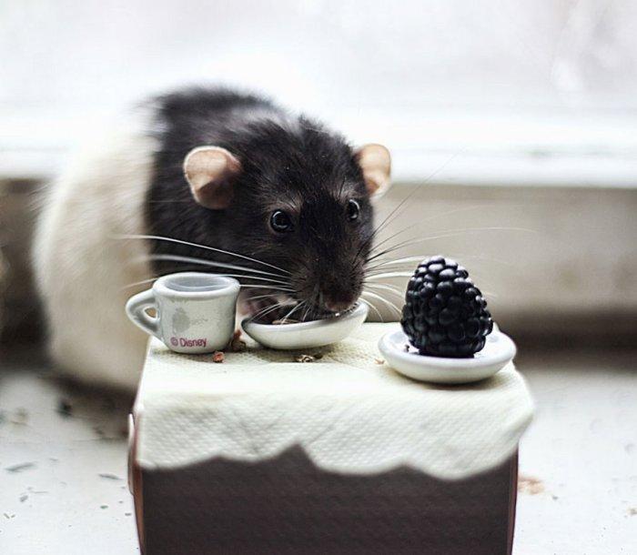 Маленький набор посуды для грызуна.