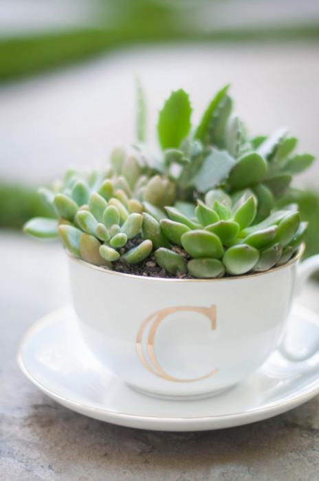 Цветы в оригинальном горшке из чайной чашки.