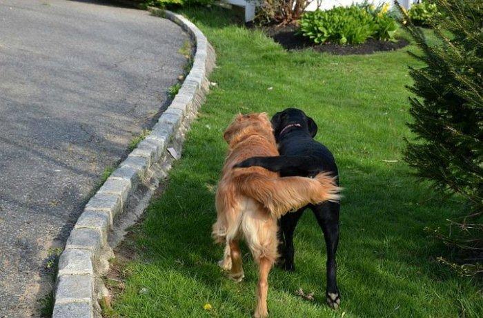 Собаки также могут дружить друг с другом.