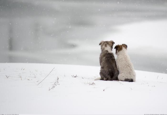Кто сможет согреть снежным зимним утром, как не самый лучший друг?