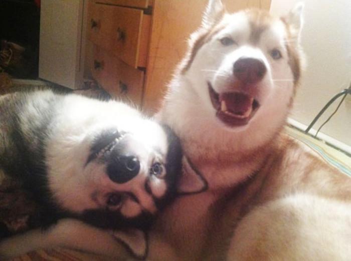 Сэлфи с лучшим другом - всегда поднимает настроение!