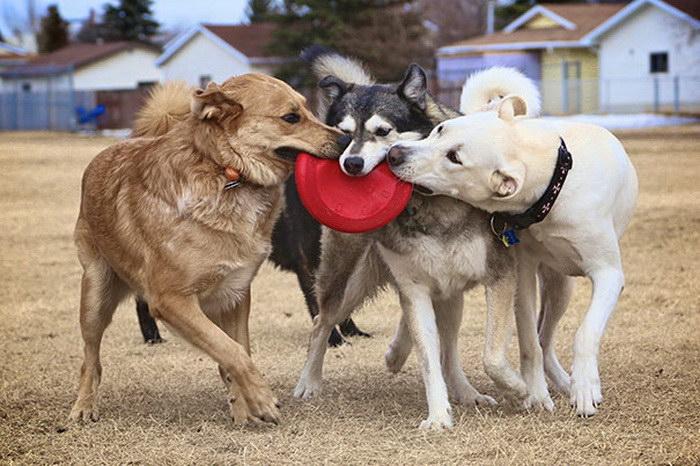 Собаки могут быть самыми верными друзьями .