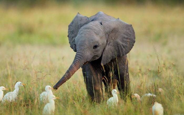 Дружелюбный слоненок познает мир.