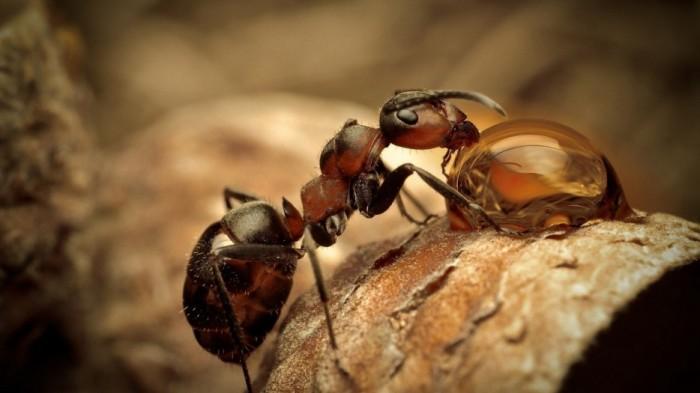 Что для человека - капля, то для муравья - озеро.