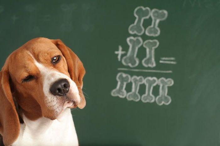 Также собаки могут понимать около 150 слов.